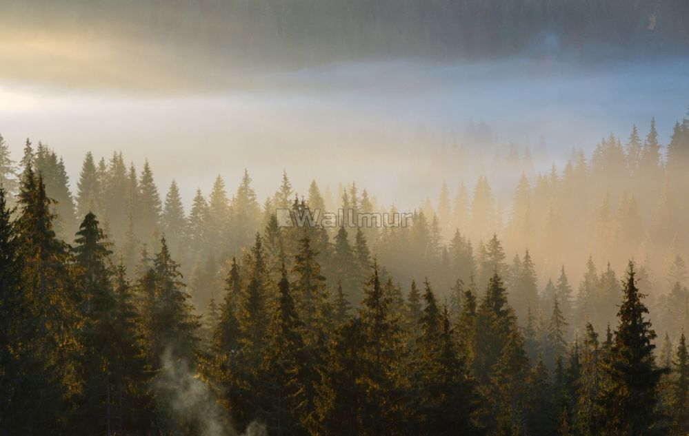 Foggy Forest Wallpaper / Foggy Forest Trees Cut Down ...