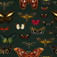 Colorful Butterfly Patterns on Green Background Wallpaper Mural