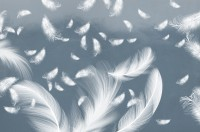 Blue Feathers Wallpaper Mural